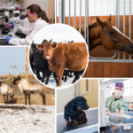 Veterinary Third Party Manufacturing Companies in India